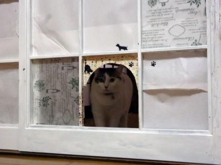 猫のココ3