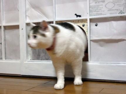 猫のココ4